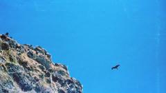 Eagle (hiphopmilk) Tags: film analog analogue 135film 35mm kodak kodakfilm yashica yashicaj jaredyeh hiphopmilk nepal pokhara kaski gandaki phewa lake tal fewa sarangkot kaskikot eagle hawk tree mountain bird rocks