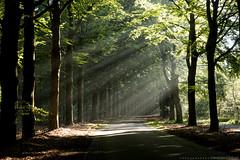 (CarolienCadoni..) Tags: sonyslta99 sal2470z sun sunbeams sunlight trees road boomkroonpad drouwen drenthe nederland netherlands september earlymorning outdoor