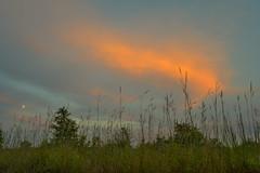 Pink Over the Moon (thefisch1) Tags: moon cloud sky grass blue stem pasture evening sunset kansas flint hill linear pink dusk interesting oogle calendar nikon prime lens 28 old