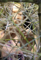 Home (huisite) Tags: weaving installation sitespecificinstallation art performance texture habitation home nest cocoon environmentalfriendly hemp wool cotton bamboo