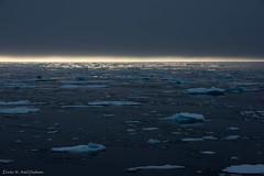 After sunset (Elvar H) Tags: arcticocean helmerhansen siarctic birds ice iceedge