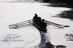 IMG_3188 (Hans Heijnen) Tags: dds regatta