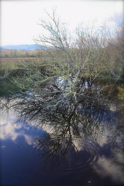 Reflections at Jackson-Fraiser wetland