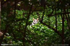 d5100+nikkor 16-85g dx (cmbytooeasy) Tags: china 3 beautiful digital cat nikon 16 nikkor  163 chung dx foshan tooeasy 1685 3556 d5100 tooeasy1989 tooeasyinside