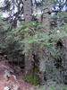 Valle del río Escrita San Mauricio (teonewman) Tags: de valle vall daneu aneu