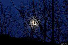Alacakaranlık Mavisi (Ali Aydın) Tags: ay mehtap sonbahar alacakaranlık abigfave ışığı mavisi