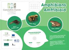 Torfaen A1 Touch Amphibians