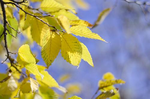 Yellow ©  Still ePsiLoN