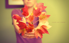 Leaves Like Flowers (Proleshi) Tags: autumn woman flower fall leaves 50mm leaf colorful purple bokeh fallcolors joy josephs jamal d300s proleshi