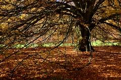 DSC_5586 (Twareg) Tags: park england gardens botanical photo nikon bath walk somerset victoria photowalk 18200mm 18200vr twareg d7000 richardwestlake bathphotowalk westlarj