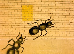 Ants by Steve Snodgrass, on Flickr