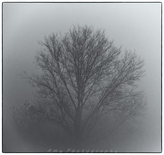 Morning (Mekengi) Tags: alberi canon nebbia mattino