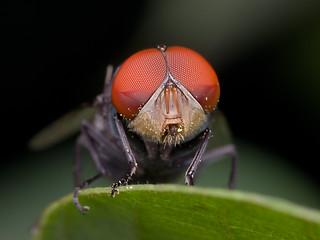 [SMGP0093-pp] Fly