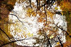 La Seronda (ngel Fdez. Fotografa) Tags: espaa de hojas asturias bosque otoo monte montaa cordillera montes aller concejo cantbrica cabaaquinta oyanco