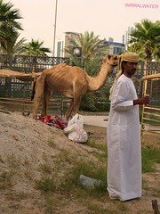Dubai Camel (wirralwater) Tags: old heritage animal town sand dubai uae camel arab area