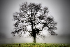 Resting Oak (Oliver Wood Photography) Tags: nature cheshire artistic fields environment atmospheric prestbury flickraward