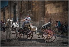 Canvi de direcci - Cambio de direccin - Change of direction (Leo Ferrer) Tags: caballo coche crdoba cochedecaballos nikond80 cochero leoferrer amicsdelacmera afsueca afcastell