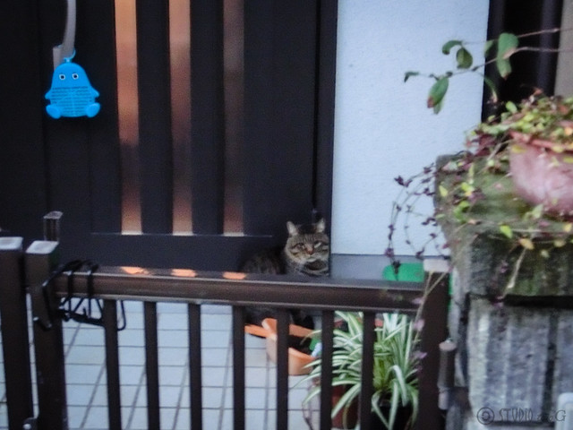 Today's Cat@2012-12-03