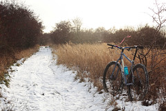 Kalvebod Dec 2012 Snow MTB (Riemanello) Tags: snow bike denmark tur swift scandinavia 29er cykel singular cykeltur kalvebod flled
