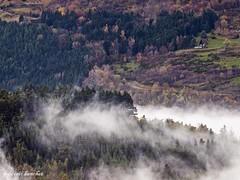 fort automnale (frdric banchet photographe) Tags: nature automne route paysage foret arbre brouillard rhonealpes parcdupilat