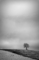 Baum (Margot in Love) Tags: sky bw tree nature monochrome landscape one blackwhite hill ngc natur himmel single lonely baum 2012 einsam separate hgel naturescape schwarzweis einzeln pentaxk5