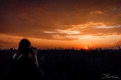Valensole V. (Tristan K.) Tags: valensole lavande lavandes lavender flower flowers summer purple fields provence france sun sunset dusk twilight champs violet t alpesdehauteprovence 04 crpuscule nightfall