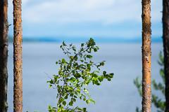 Summer Landscape (@Tuomo) Tags: finland summer päijänne jämsä landscape simplistic nikon df 300mm4 pf