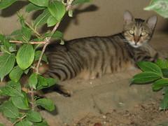 Cats_in_Trabzon (5) (Sasha India) Tags: cat turkey chat trkiye tur trkorszg journey gato  macska turquia kedi trabzon
