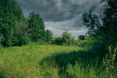 (gwilwering) Tags: forest grass green landscape meadow nature outdoor rain sky trees         tyumen siberia   sonya350
