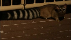 ringtail2 (cresthouse) Tags: sandia crest house new mexico 2 two miles high