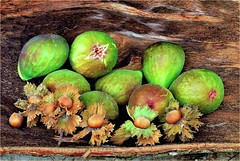 Maduro Y Dulce / Ripe And Sweet (Konny D.) Tags: figs feigen fichi figues higos figos hazelnuts haselnsse nocciole noisettes avellanas avels