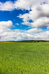 Summer perfect 2 (mbridgener) Tags: summer sun sunny field harz feld tre trees bume outdoor flower clouds wolken perfection natur nature grass open landsschaft landleben countryside rural yield germany canon eos 700d