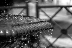 IMG_8968 (Lens a Lot) Tags: zenit helios 44   58mm f2 bokeh depth field drop fountain water splash black white wide open vintage manual prime lens russia russian fixed made ussr noir et blanc monochrome