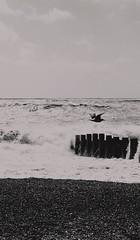 St Leonards on Sea, Hastings (niknak2016) Tags: seascape seaphotography sea water wave whitewaves waves crashingwaves beachphotography beach pebblebeach pebbles coastline coast coastal coastalphotography shoreline shore shallowwaters birds bird seagull gull birdinflight birdphotography blackandwhite monochrome