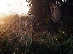 Spider's web 2 (Oczyma Duszy) Tags: parkkrajobrazowy dolinabystrzycy bystrzyca rzeka mga magia lovecraft krajobraz urbex jarnotw rosa pajczyna pajk poranek ranek wschdsca bokeh ba olympusepl5 mzuikodigital river mist fog landscape park magic fairytale dew web spider morning sunrise