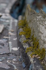 Life on the old Boat (Dave Denby) Tags: abandoned algae boat dinghy moss old plantsandnature relic sea seaside seaweed