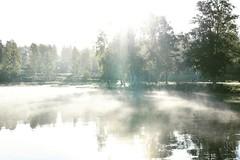 Misty morning. (anek07) Tags: autumn mist misty sunny soligt dimmigt september woods birches lake fryken värmland sverige sweden reflection bright ljust light highkey monday