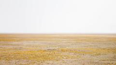(FreeMax0207) Tags:   tibet china