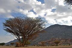 _DSC0304 ( ) Tags: camping sky tree night landscape desert jeep   cloude