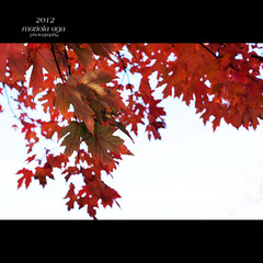 Transition phase ... (mariola aga ~ non-professional member) Tags: autumn red color tree nature leaves square dof bokeh damn change transition phase coth thegalaxy coth5 thesunshinegroup sunrays5