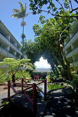 Uncle Billys Hotel, Hilo, Hawaii (Melissa Emmons Photography) Tags: bridge trees nature beautiful canon landscape hawaii hotel pond koi 5d hilo unclebillys