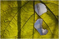 20121028. The leaf. 5732. (Tiina Gill (busy)) Tags: autumn fall nature leaf estonia hole supershot flickrdiamond vanagram