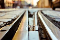 On the most romantic trolley railway (_Franck Michel_) Tags: street bokeh trolley rail railway rue tramway mygearandme egitf12