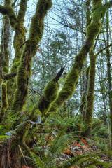 The Forest (John Westrock) Tags: autumn trees fall nature leaves vertical forest canon washington moss quiet branches scenic bluesky shade preston limbs ferns processed leaning hdr atmospheric lean fallcity peatmoss smallhill canoneos7d