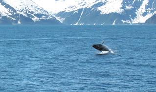 Alaska Kenai River Fishing and Saltwater 29