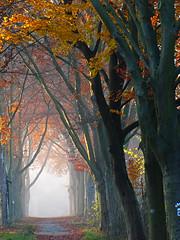 Path to fairyland (RainerSchuetz) Tags: november autumn trees mist fall beech photomix slicesoftime blinkagain bestofblinkwinners besteverdigitalphotography