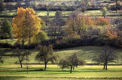 Herbstliche Streuobstwiesen  Meadow with scattered fruit trees (Objektkontrast) Tags: herbst tbingen badenwrttemberg ammertal