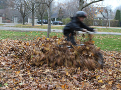 C.J. Riding through The Leaves (Tiger955) Tags: twothumbsup