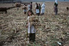 AL KK P0002348 (setboun photos) Tags: europe communism historical albania socialism southerneurope albanie kukes europedusud politicalandsocialissue balkaniccountry lalbaniealabridutemps