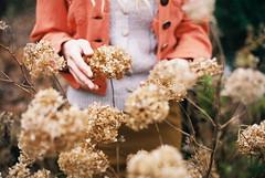 . (anna nycz) Tags: flowers autumn film girl analog 35mm hands rce gawlak